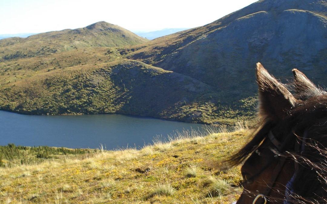 Horse & Mountain View