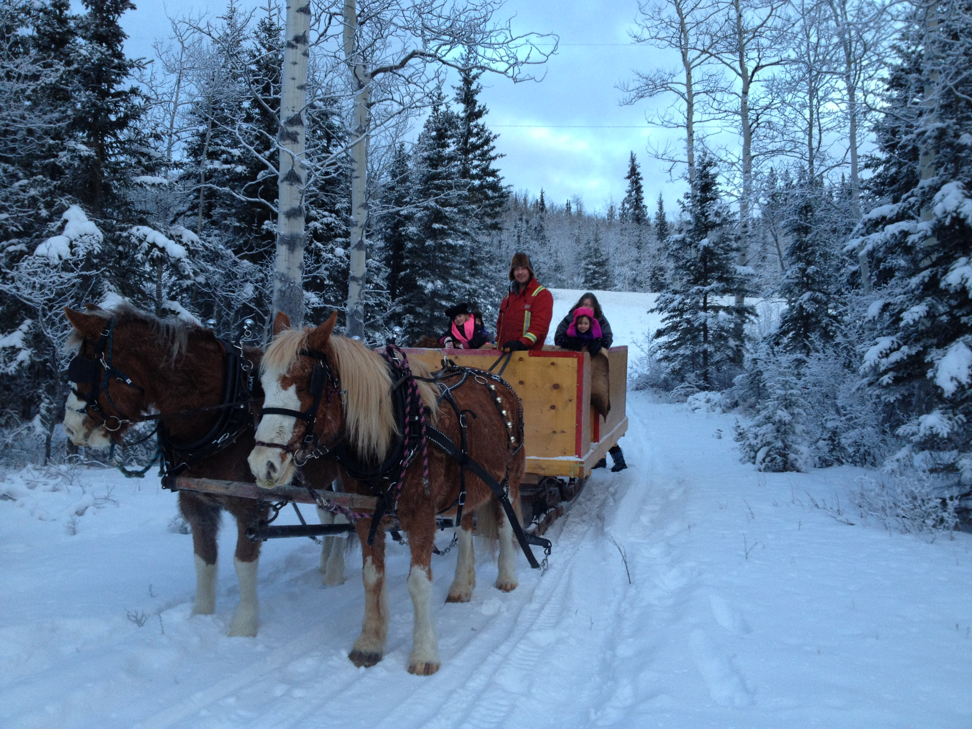 Experience a Winter Horse Drawn Sleigh Ride with family or friends!